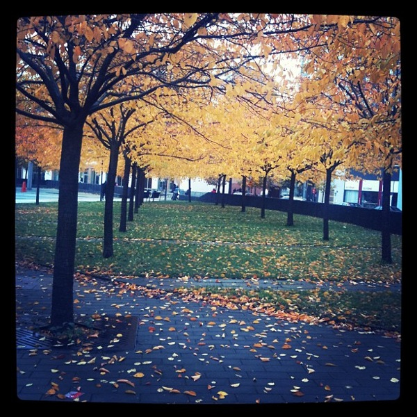 Autumn leaves in Stockholm