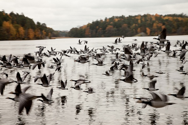 Birds at Drottningholm