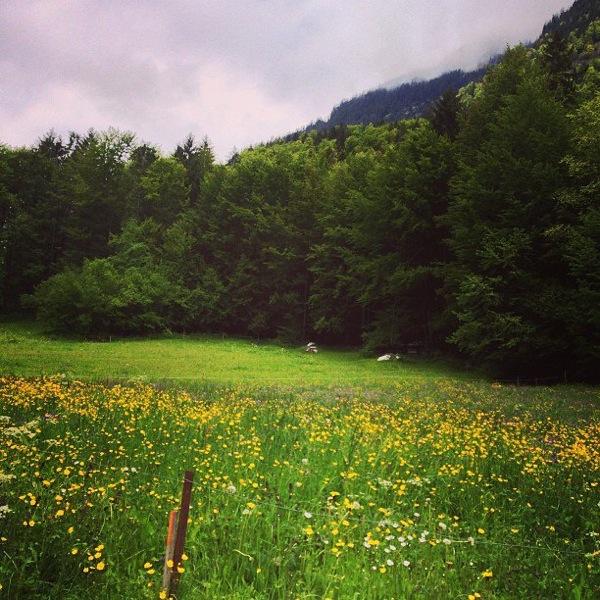 Wildflowers in Switzerland